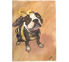 Bumble Bee Photographic Print