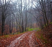 Forest road by naturalis