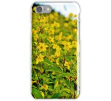 Meadow Flowers: Fringed Loosestrife iPhone Case/Skin