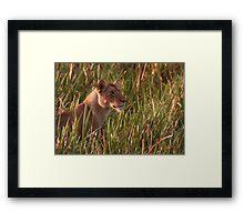Lioness In The Marsh  Framed Print