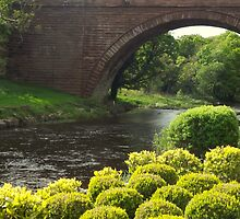 Bushes , Bridge and River by Bill Lighterness