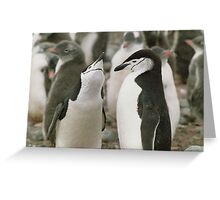 Chinstrap Penguin Courtship Greeting Card