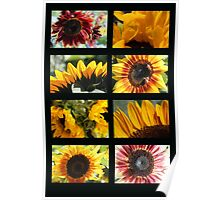 Sunflower Collage 2 Poster