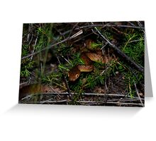 Brown Tree Snake Greeting Card