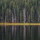 Canoeing on Piney Lake by Luann wilslef