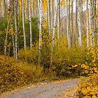 Fall drive in Colorado  by Luann wilslef