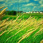 in the fields II by Stefan Chirila