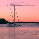 PINK EVENING PARADISE POINT. QLD. by Virginia McGowan