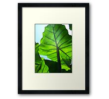Green Veins Framed Print
