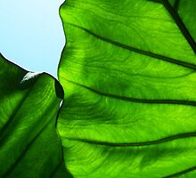 "Green Veins 2 by Lenora ""Slinky"" Regan"