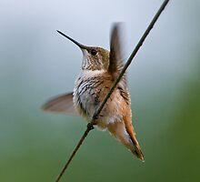 Hummingbird Summer II by David Friederich
