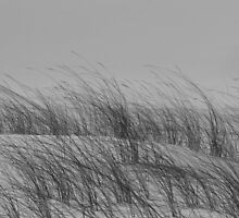 Dune Patterns by JustineEB