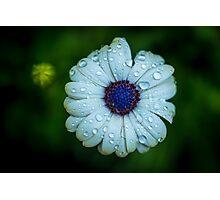 Singing In The Rain Photographic Print