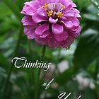 Thinking of You Card by Sue Ellen Thompson