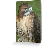Caerphilly's Falcons Greeting Card