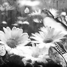 Small Miracles by Daniela M. Casalla