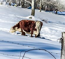 Winter Grazing by Rebecca Bryson