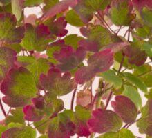Colorful Wild Columbine Leaves Sticker