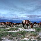 Horses on the Mongolian plain by Christopher Meder