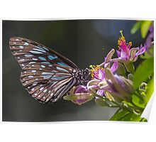 Blue Tiger, Pink Flower Poster