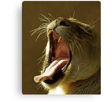 Yawning. Canvas Print