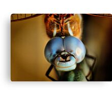 Dragonfly Up Close Canvas Print