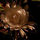 Night Blooming Cereus II by Amanda Figueroa