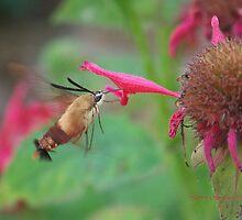 Sweet Tastey Flower  by ChereeCheree