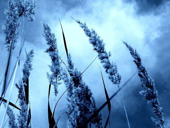 Blue by Friederike Alexander