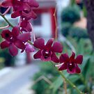 Crimson Orchids by Kinniska