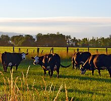 ...And the Air Smells of Alfalfa by Lynda Berlin