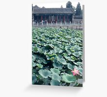 Lilies in the Summer Greeting Card