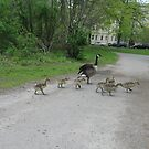 Make Way for Goslings by Kinniska