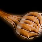 Lightning Whelk Seashell by Bonnie T.  Barry