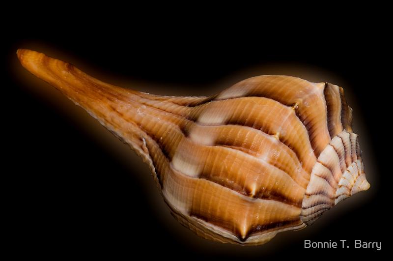 Lightning Whelk Seashell by Bonnie T.  Barry