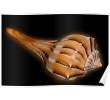 Lightning Whelk Seashell Poster