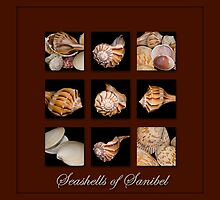 Seashells of Sanibel by Bonnie T.  Barry
