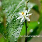 """Rainwashed"" by Magriet Meintjes"