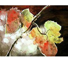 Susnet Maple Leaves Photographic Print