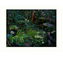 Little Beach Rainforest Australia Art Print