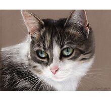 My adopted cat Morka Photographic Print
