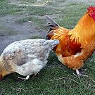 I love chooks! by Magee