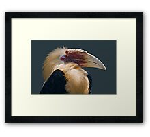 Mr Fluffy Framed Print