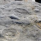 Set In Stone,,,,,,, by lynn carter