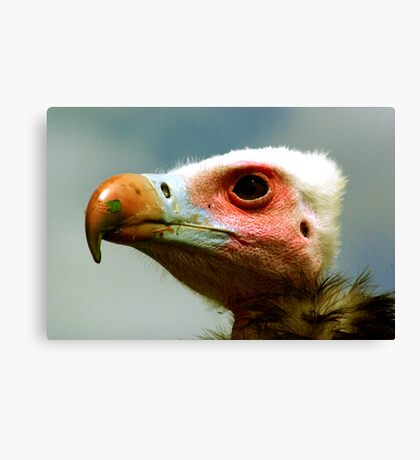 Ethel the Vulture 1 Canvas Print