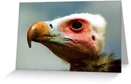 Ethel the Vulture 1 by Trevor Kersley