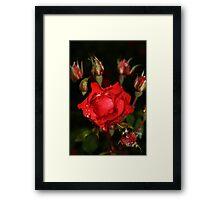 Red Rose at Dusk Framed Print
