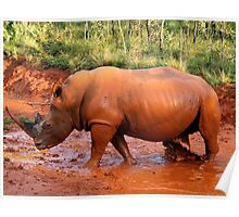 White Rhino mudbath at Entabeni Lodge Poster