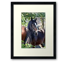 Horses at Play Framed Print