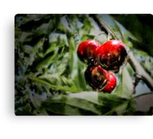 Some cherries Canvas Print